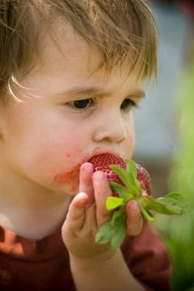 Asher Strawberries 2009